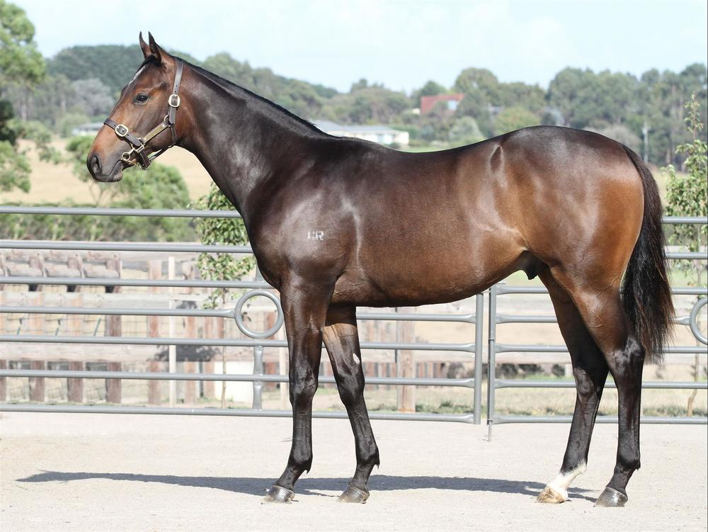 Inglis Premier - Lot 98 Master of Design x Cos Snip