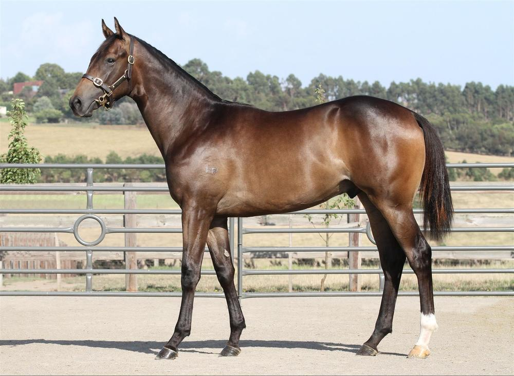 Inglis Premier - Lot 136 Dream Ahead x Edge Of The World