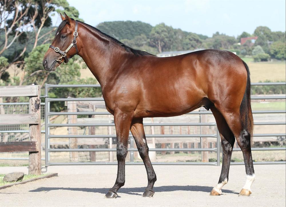 Inglis Premier - Lot 213 Manhattan Rain x Holly Go Lightly