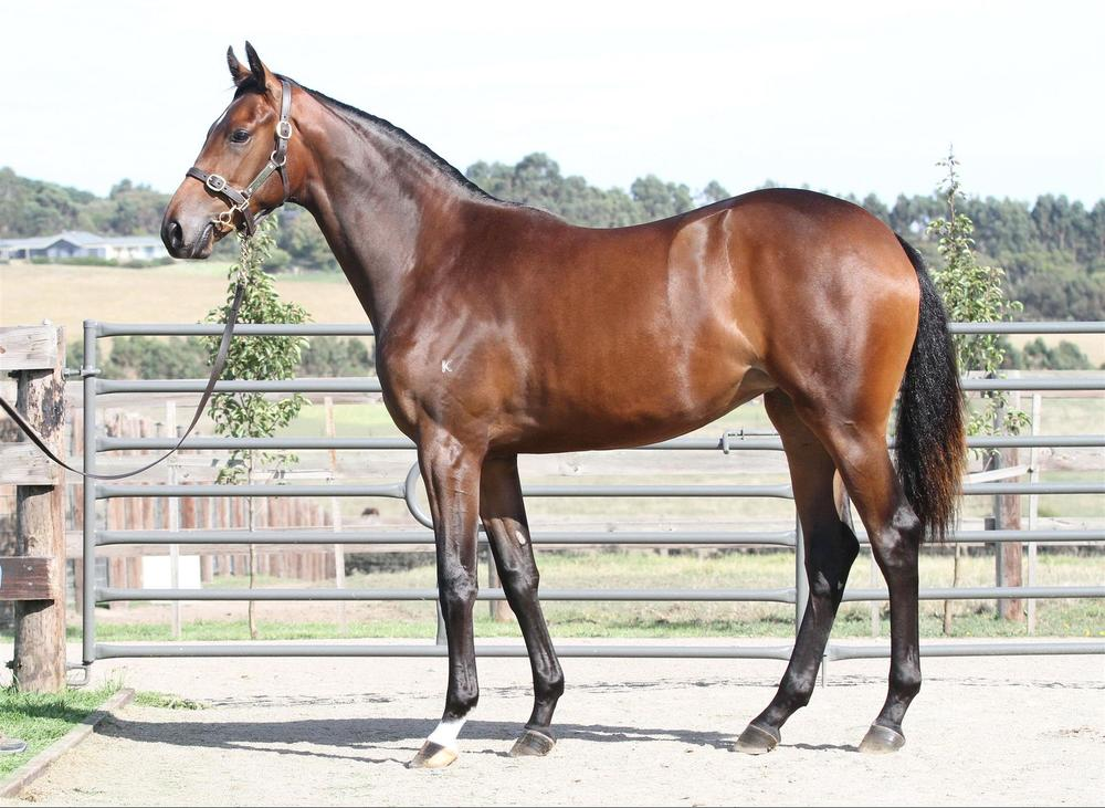 Inglis Easter Yearling Sale - Lot 465 Bernardini x Salina Cruz