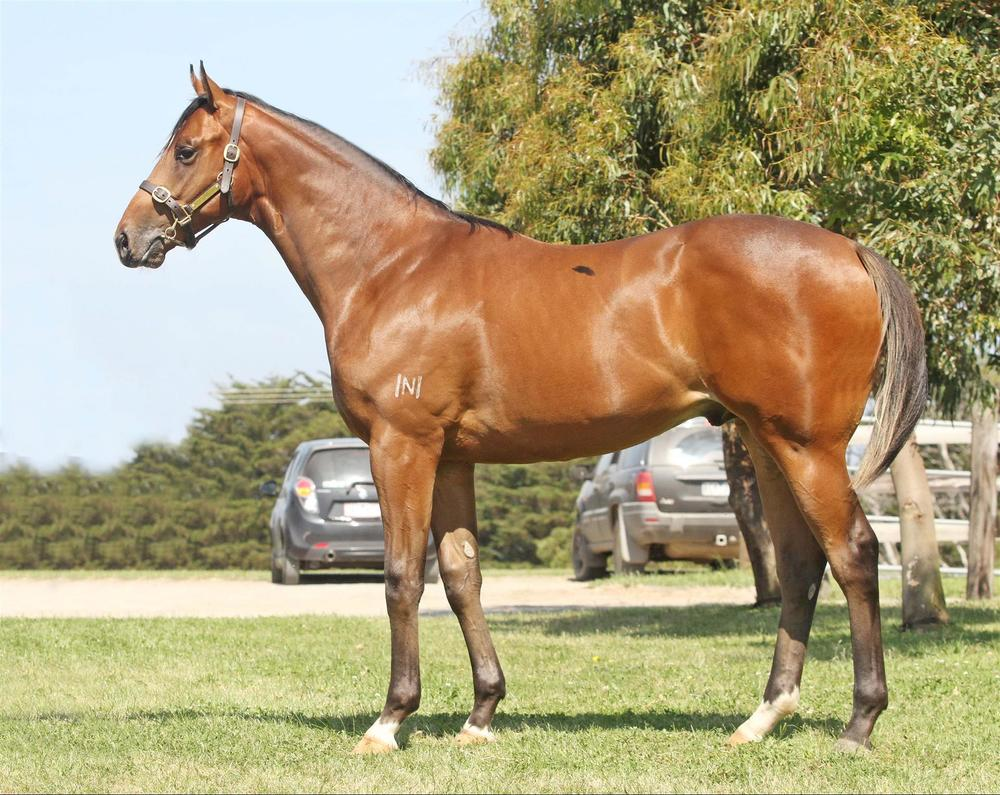 Lot 25 Beneteau x Rocketing Gold Coast Magic Millions