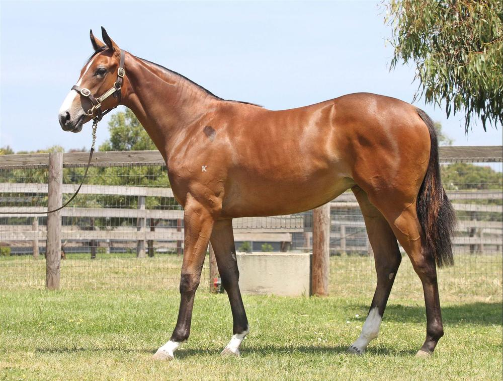 Lot 518 Starwitness x Liaisons Gold Coast Magic Millions