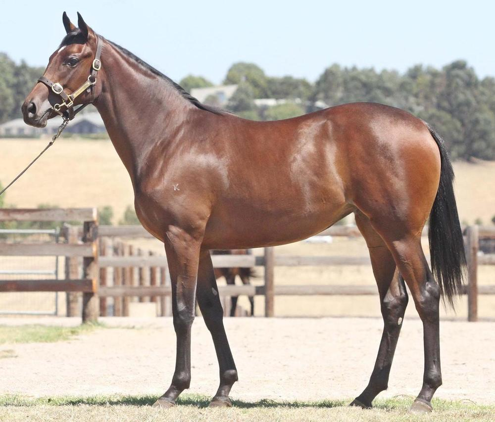 Lot 203 High Chaparral x Happy Empress Filly Inglis Melbourne Premier Sale