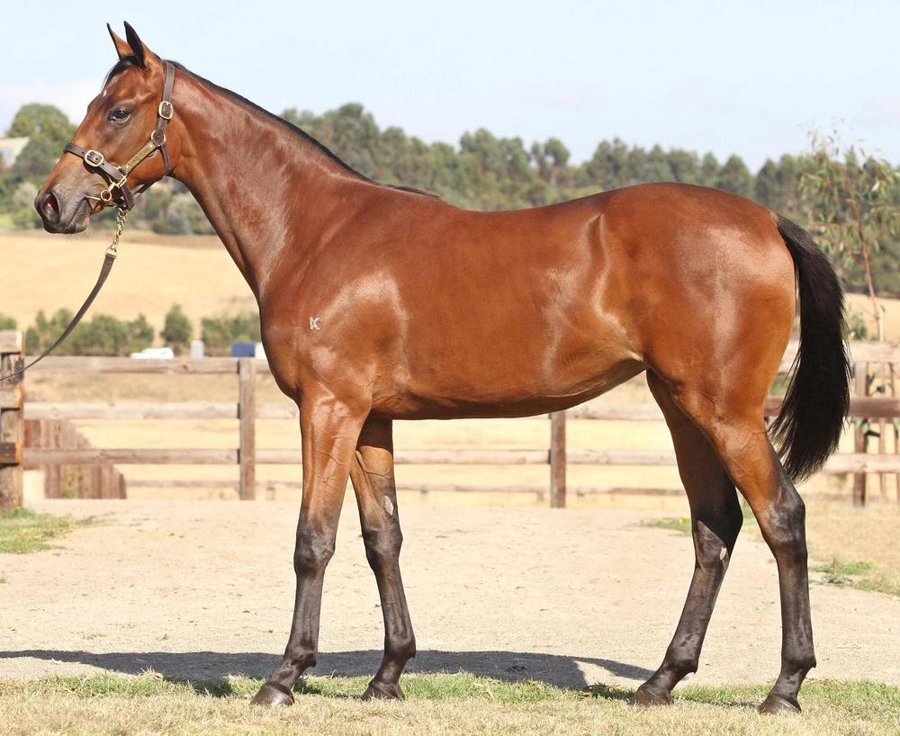 Lot 355 Starcraft x Edge of The World Filly Inglis Melbourne Premier Sale