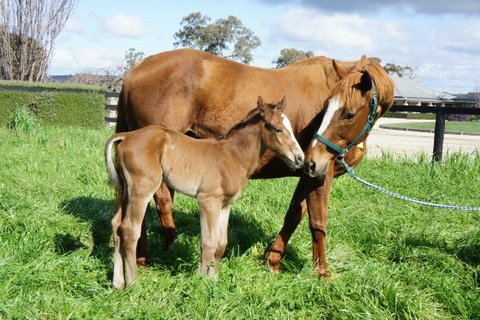 Pierro x Exceedingly Happy - Bay Colt - 2016