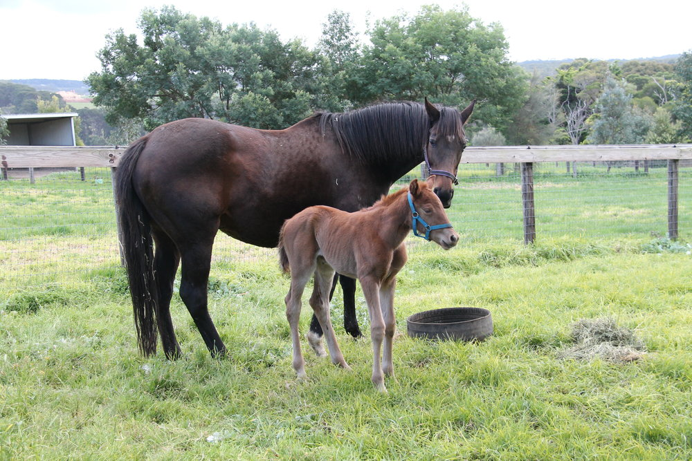 Turffontein x Salina Cruz 17 Filly