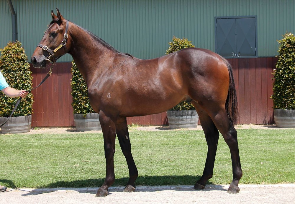 LOT 576  SIRE: Deep Field  DAM: Caesar's Princess  Brown Colt  PURCHASER: Sweetbrair Equine/Snowden Racing Pty Ltd  PRICE: $340,000.00