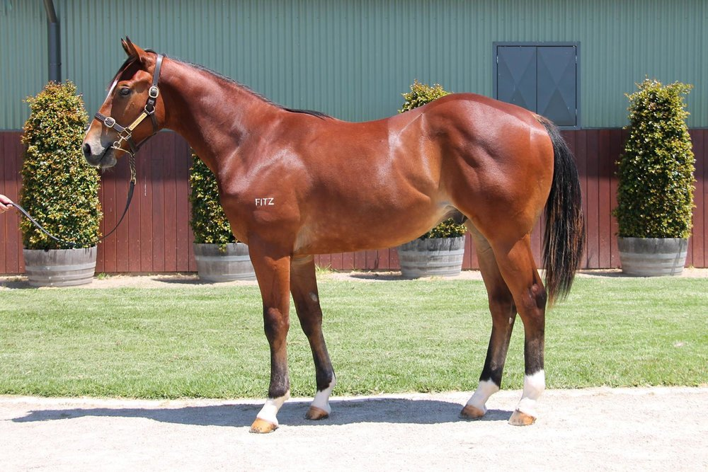 LOT 58  SIRE: Hinchinbrook  DAM: Maglissa  Bay Colt  PURCHASER: Gai Waterhouse/Adrian Bott/Bluebloods Thoroughbreds  PRICE: $80,000.00