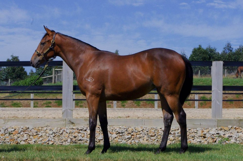 LOT 425  SIRE: Not A Single Doubt  DAM: Vintage Quality  Bay Filly  PURCHASER: RIFA Mustang Pty Ltd  PRICE: $240,000.00