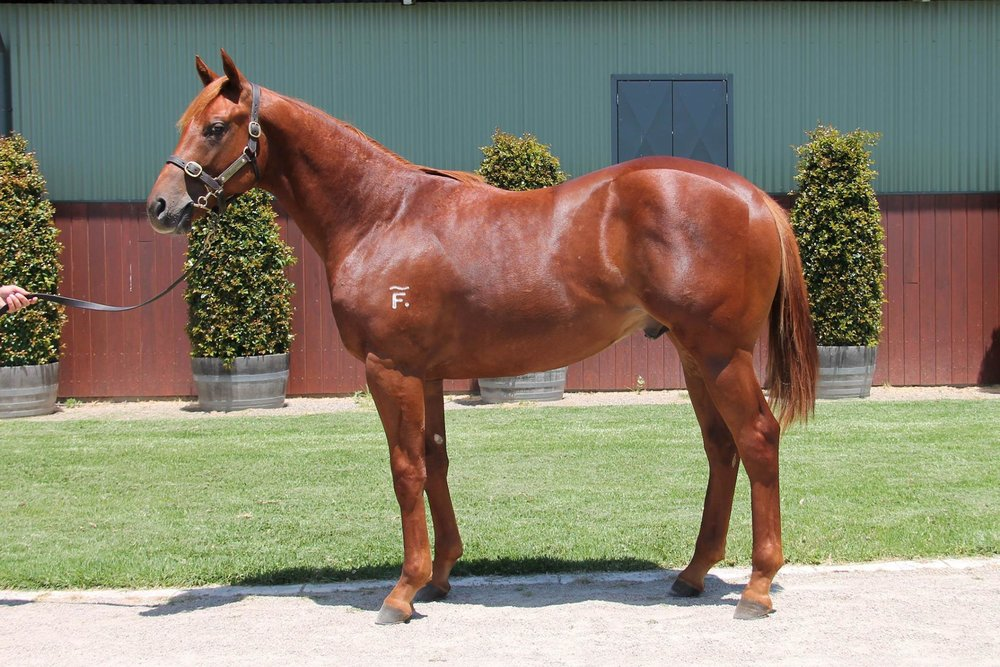 LOT 744  SIRE: Rubick  DAM: Freezethemillions  Chestnut Colt  Passed In $130,000 Reserve $150,000