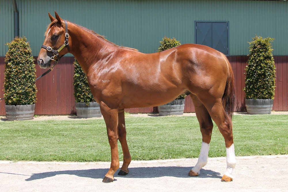 LOT 389  SIRE: Street Boss (USA)  DAM: Tigress Joy  Chestnut Colt  PURCHASER: Gai Waterhouse & Adrian Bott Racing  PRICE: $150,000.00