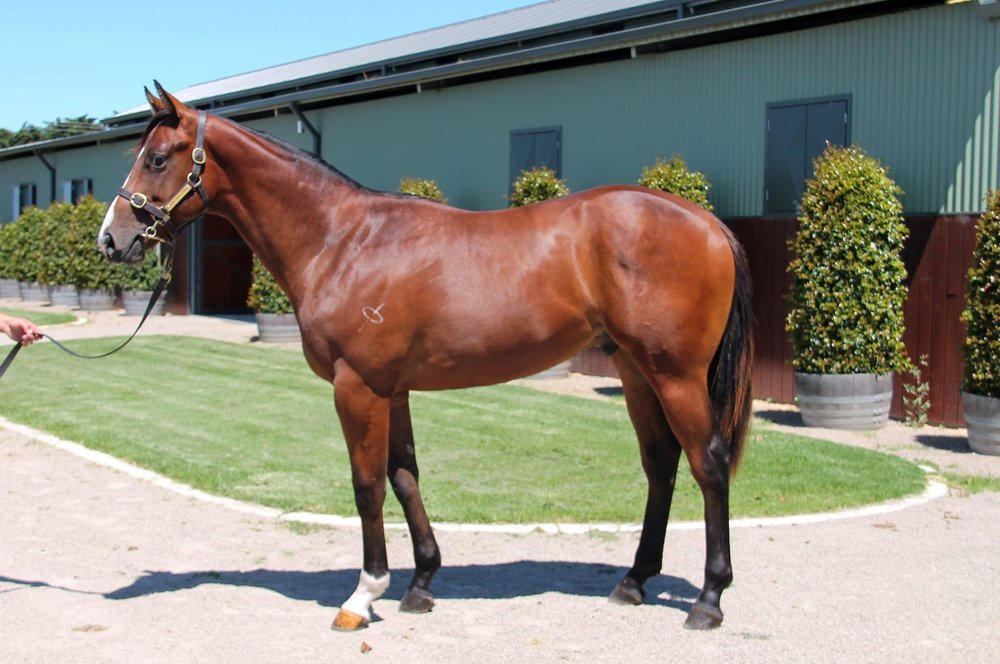 LOT 574 More Than Ready (USA) x Byatt Colt