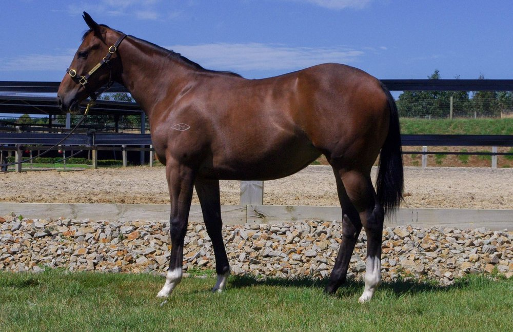 LOT 692 Toronado (IRE) x Emma Princess Filly