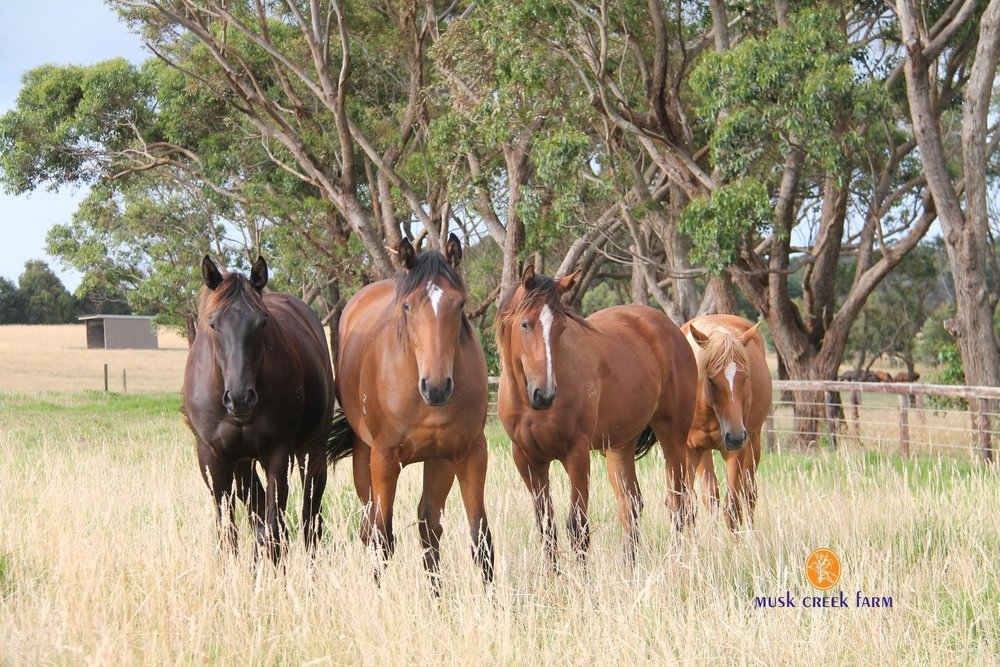 Yearling Fillies with Logo.jpg