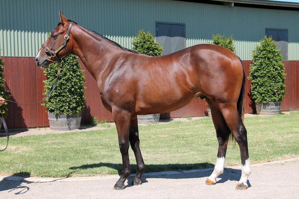 LOT 435  SIRE: Deep Field  DAM: Hemingway Rules  Bay Colt  PURCHASER: G Waterhouse/A Bott/Blue Sky Bloodstock (FBAA) NSW  PRICE: $90,000.00