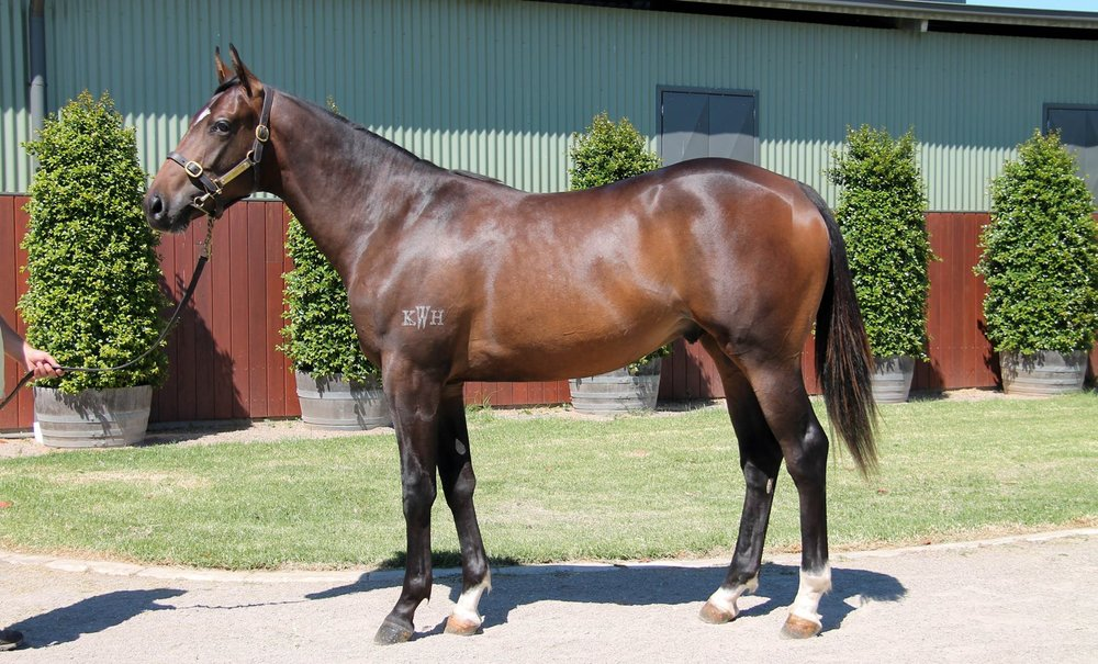 LOT 359  SIRE: Hinchinbrook  DAM: Deverra  Bay/Brown Colt  PURCHASER: Mark Newnham Racing NSW  PRICE: $80,000.00
