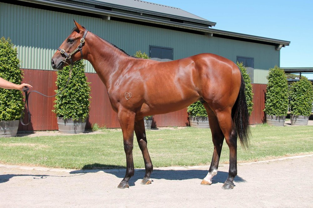 LOT 152  SIRE: Smart Missile  DAM: Sweet Talk  Bay Colt  PURCHASER: Sweetbriar Equine/N Auld HONG KONG  PRICE: $170,000.00