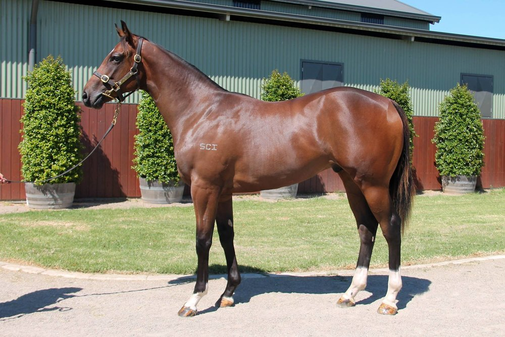 LOT 274  SIRE: Toronado  DAM: Baize  Bay Colt  PURCHASER: Boomer Bloodstock (FBAA)/L Smith WA  PRICE: $175,000.00