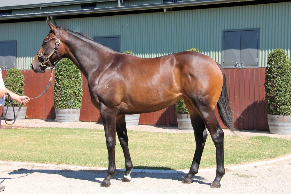 LOT 169  SIRE: Brazen Beau  DAM: Sublimity  Brown Filly  PURCHASER: Malua Racing/C Decorsey VIC  PRICE: $70,000.00