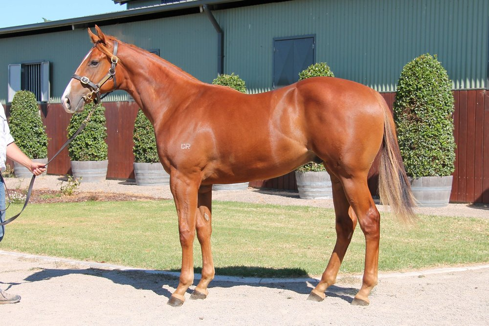 LOT 262  SIRE: Written Tycoon  DAM: Beachfront  Chestnut Colt  PURCHASER: Ciaron Maher Bloodstock VIC  PRICE: $240,000.00