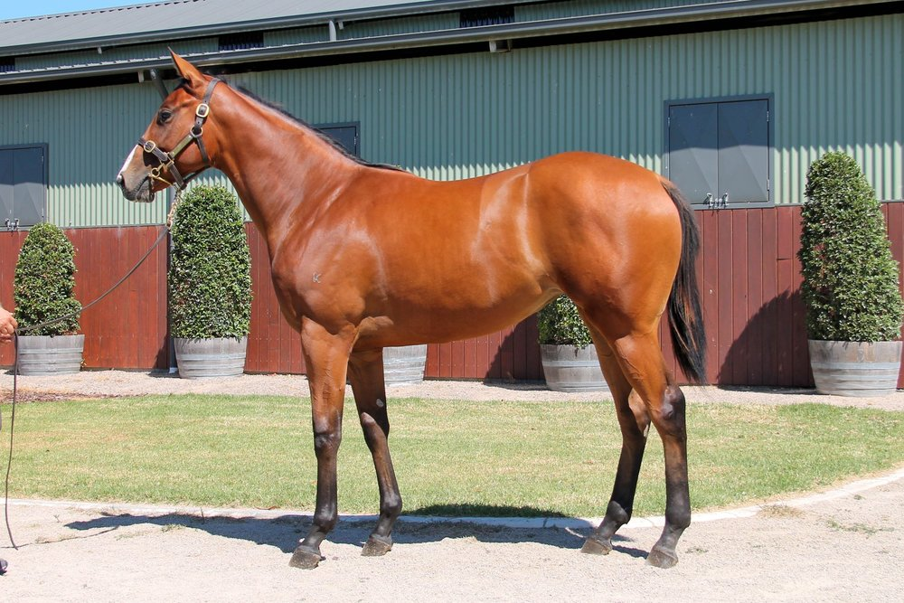 LOT 399  SIRE: Toronado  DAM: Fustaan  Bay Filly  PURCHASER: Northwood VIC  PRICE: $50,000.00