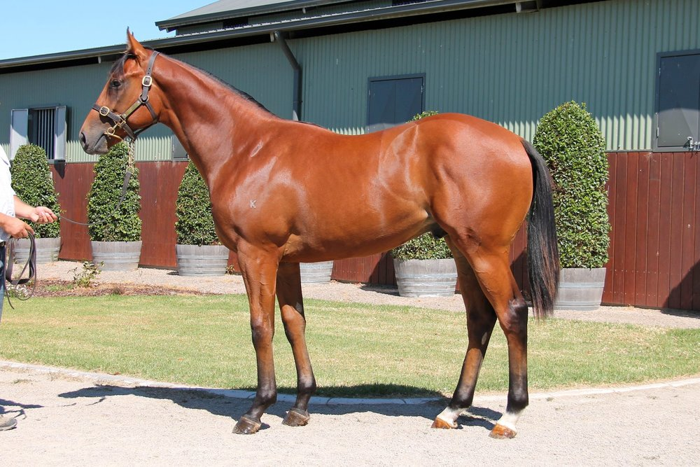 LOT 412  SIRE: Wandjina  DAM: Guelder  Bay Colt  PURCHASER: Agile Thoroughbreds HONG KONG  PRICE: $140,000.00