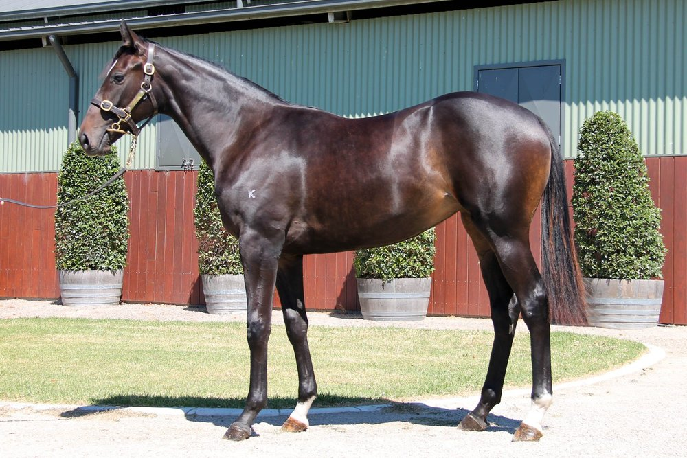 LOT 482  SIRE: Written Tycoon  DAM: Liaisons  Brown Filly  PURCHASER: Yu Long Investments (Australia) Pty Ltd VIC  PRICE: $40,000.00