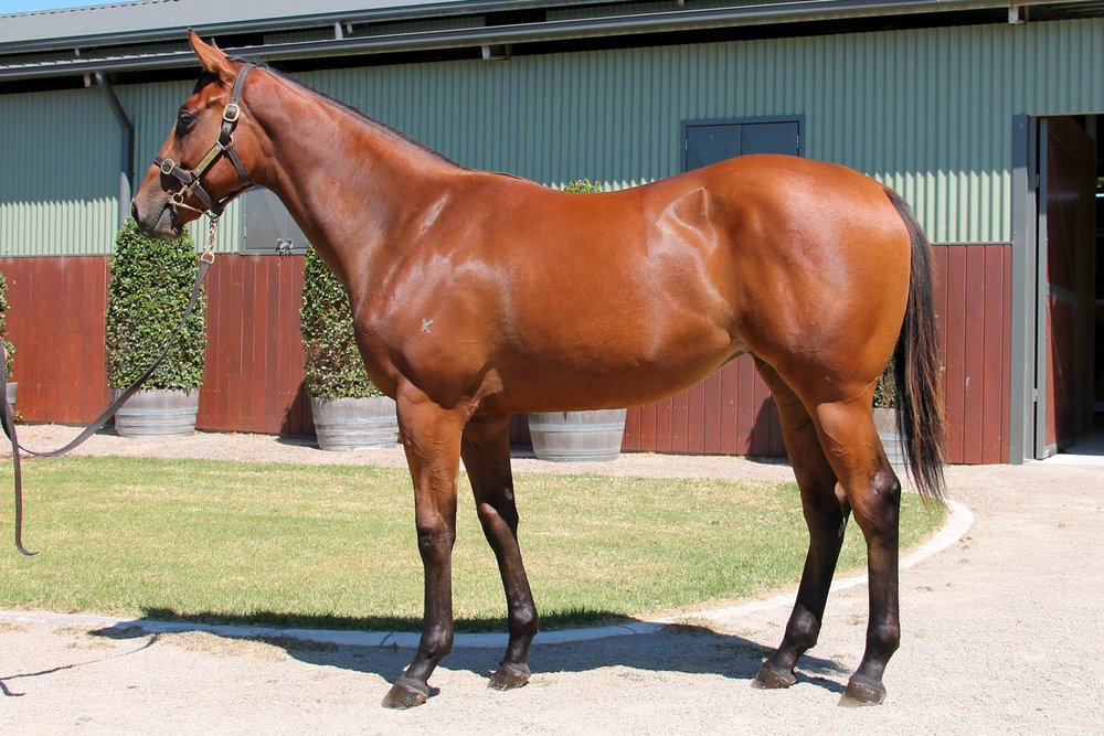 LOT 453  SIRE: Pierro  DAM: Keep De Rose  Bay Filly  PURCHASER: J Blacker TAS  PRICE: $100,000.00