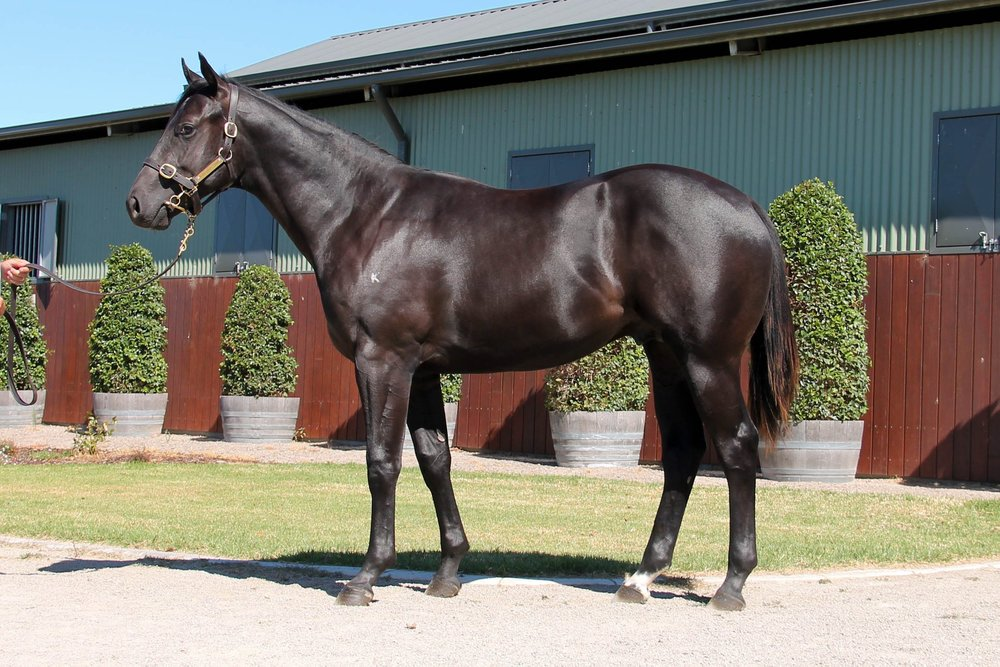 LOT 537  SIRE: Dissident  DAM: Mumtaazah  Brown Colt  PURCHASER: Lohan Equing/M C Tam HONG KONG  PRICE: $70,000.00
