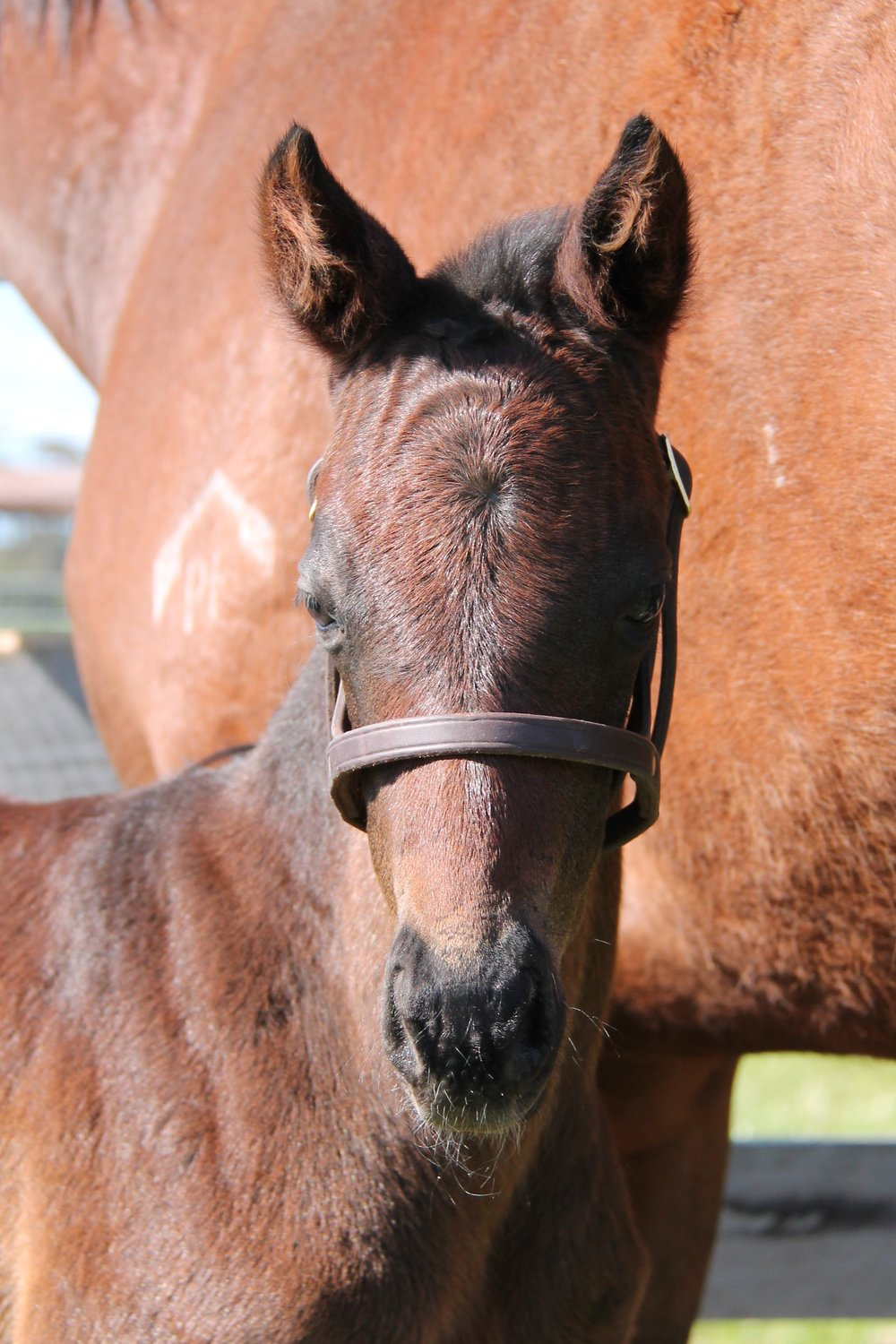 Molly (More Than Ready x Leny's Here Filly)