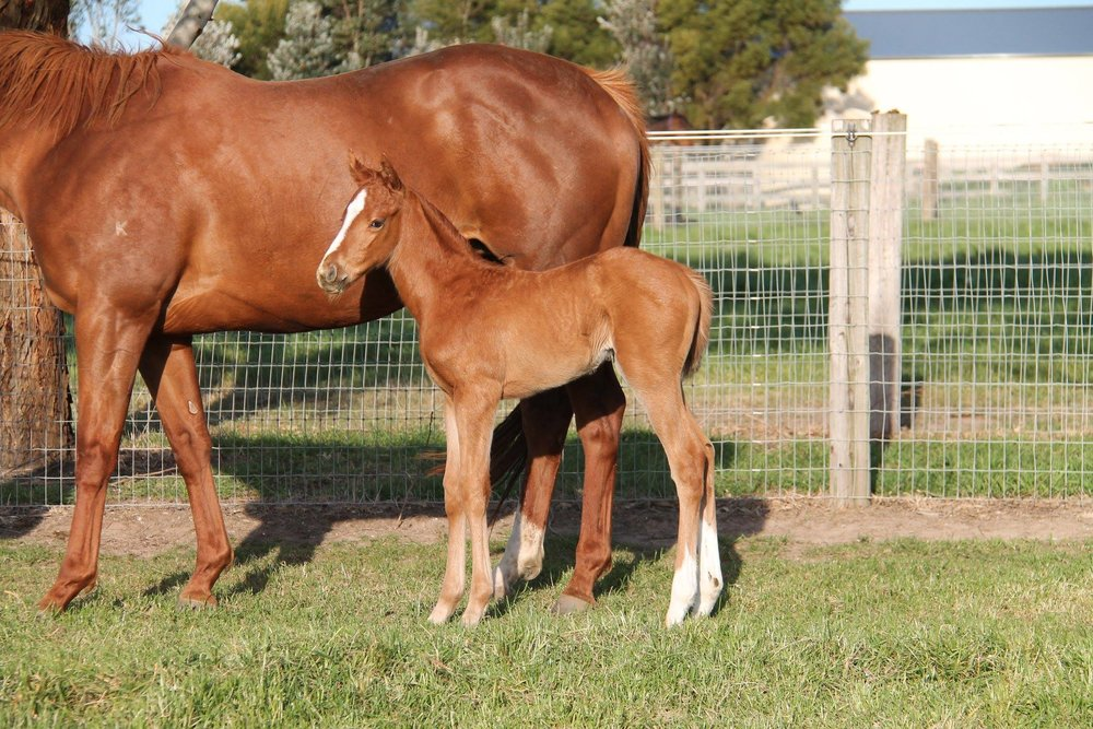 Susie (Star Witness x Imperial Empress Filly)