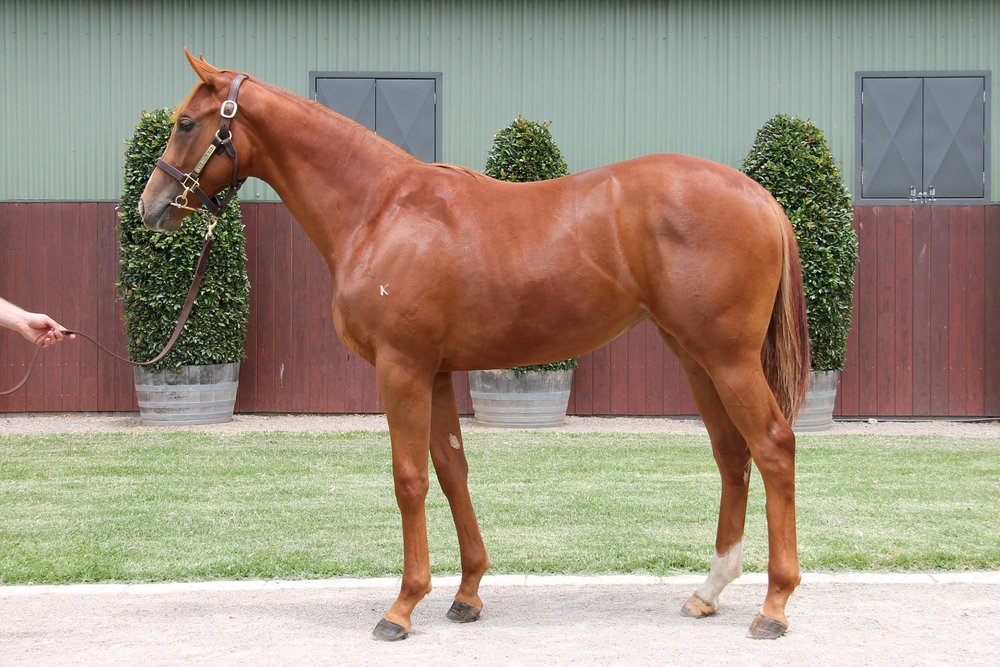 Lot 399 Sebring x Bellissima Miss (NZ) filly