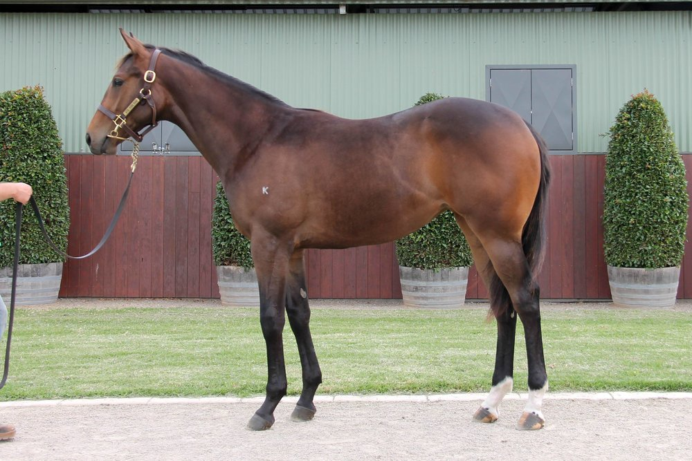 Lot 279 Street Boss (USA) x Warrington filly