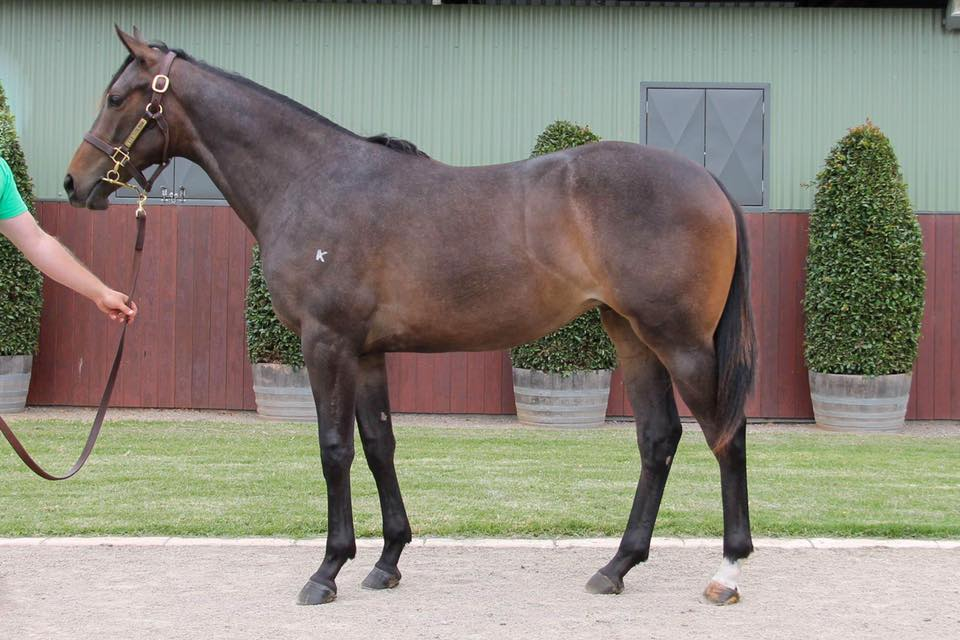 Lot 674 - So You Think (NZ) x If I Can I Can (NZ) 17 Filly - Sold for $100,000 to Gai Waterhouse & Adrian Bott Racing
