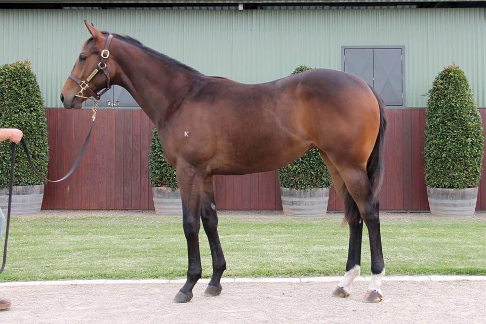Lot 279 - Street Boss x Warrington 17 Filly Sold for $75,000 to Australian Chinese Jockey Club