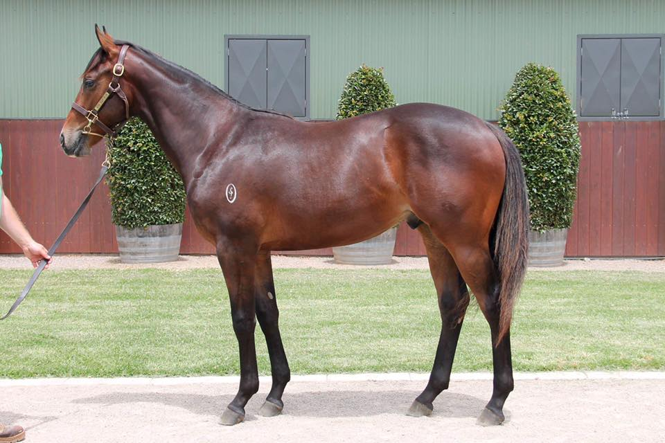 Lot 743 - Vancouver x Light Touch 17 Colt - Sold for $170,000 to Gai Waterhouse & Adrian Bott Racing
