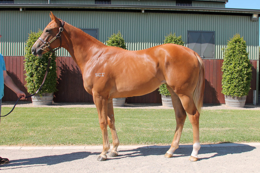 Lot 953 Toronado (IRE) x Path Of Love (USA) 17 Filly
