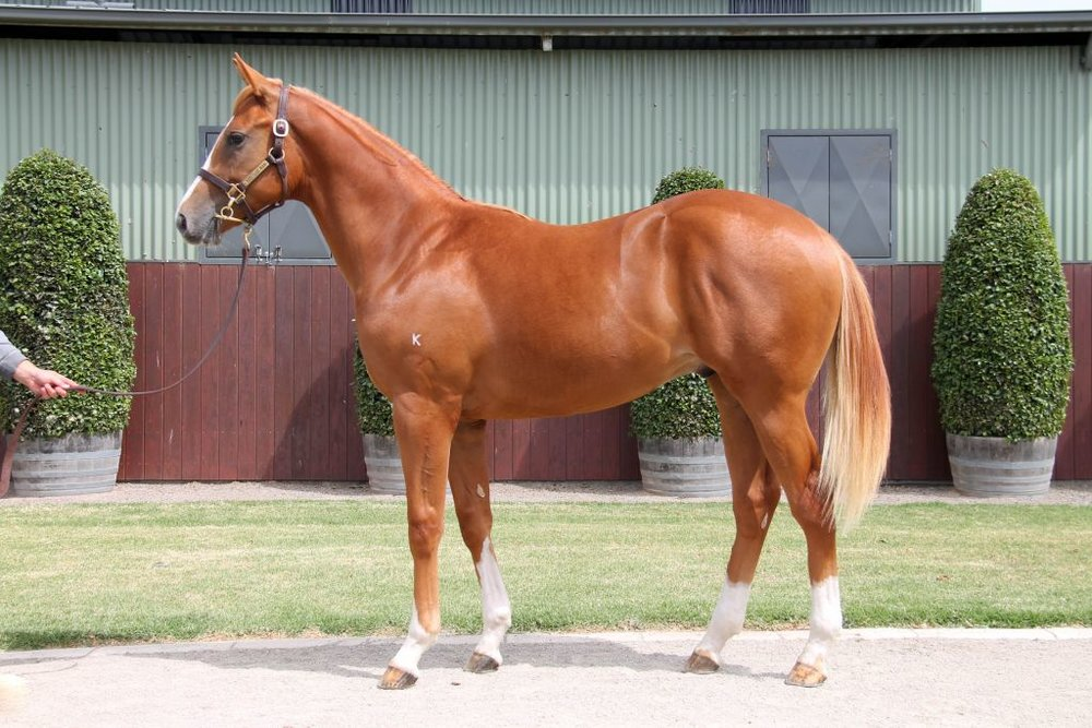 Lot 557 - Scissor Kick x Betterthanblushing 17 Colt - Passed In, Reserve $50,000
