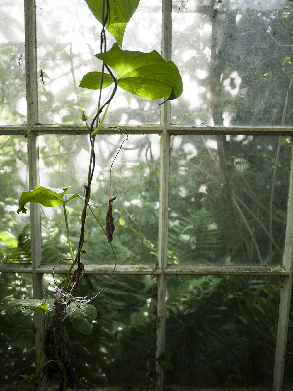 greenhouse_3.jpg