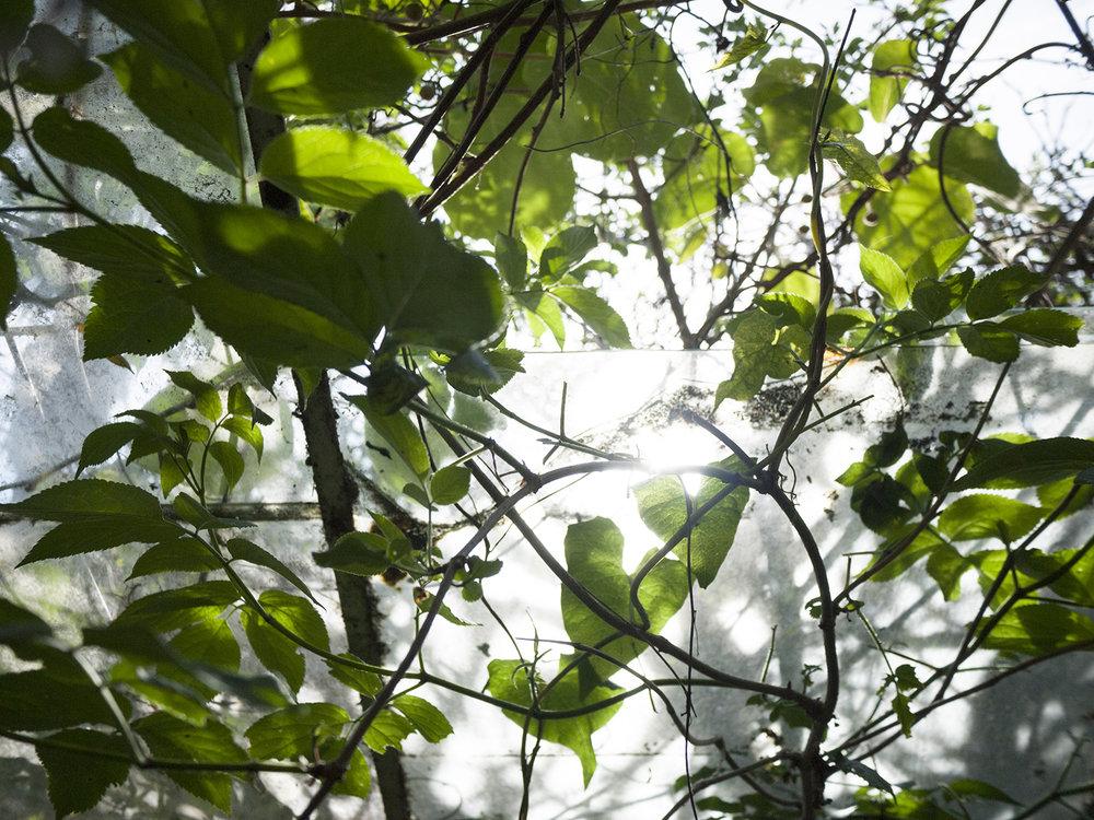 greenhouse_4.jpg