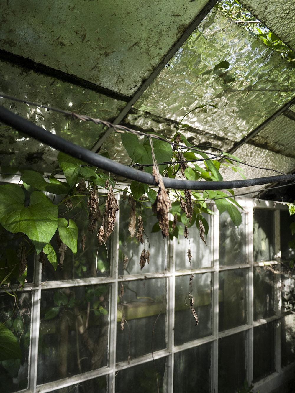 greenhouse_6.jpg