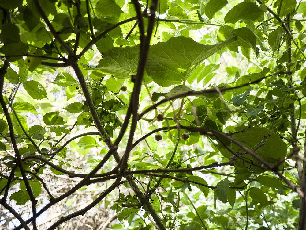 greenhouse_5.jpg