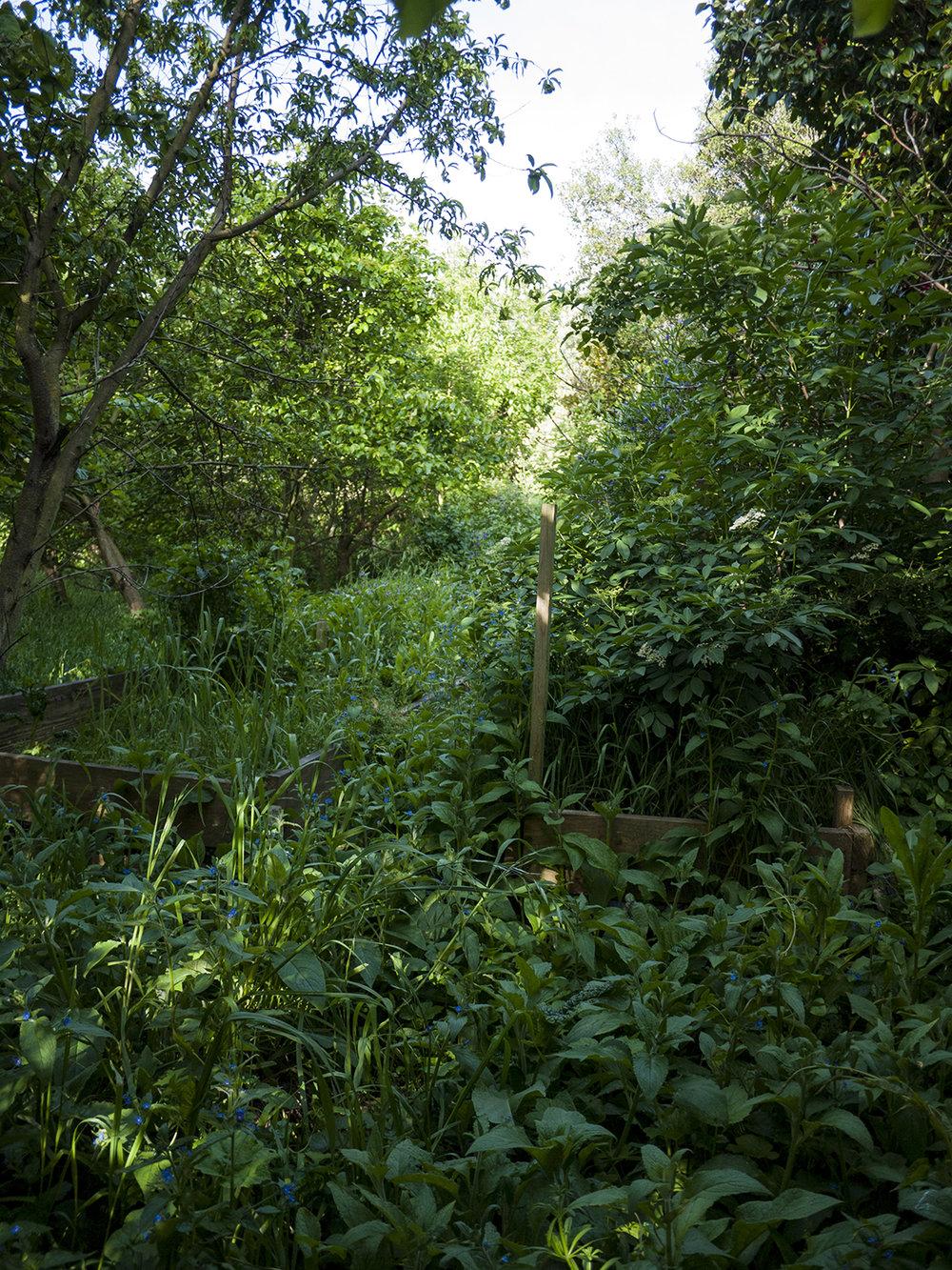 orchard_3.jpg