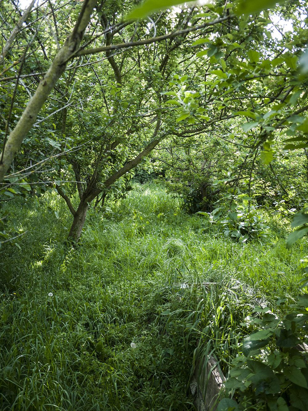 orchard_8.jpg