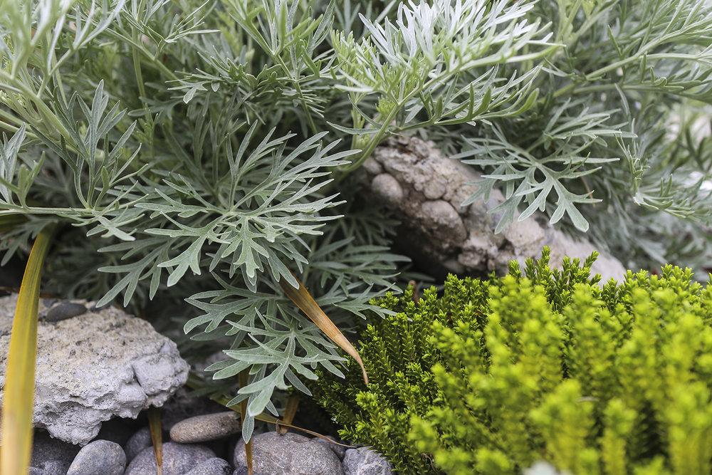 THE VITAL GREEN -