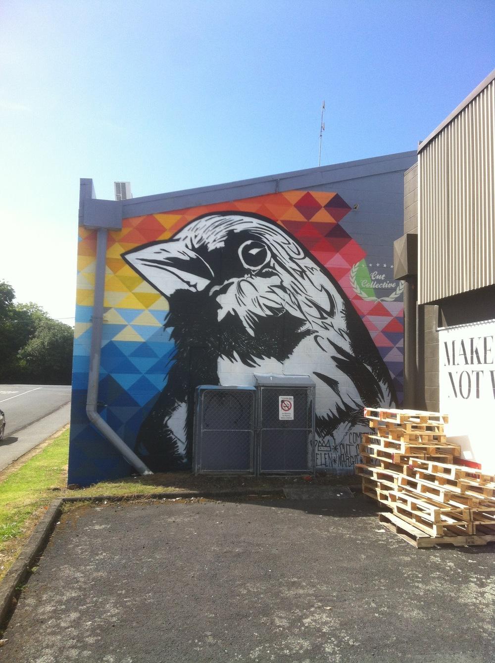 Sparrow Grey Lynn Auckland 2014