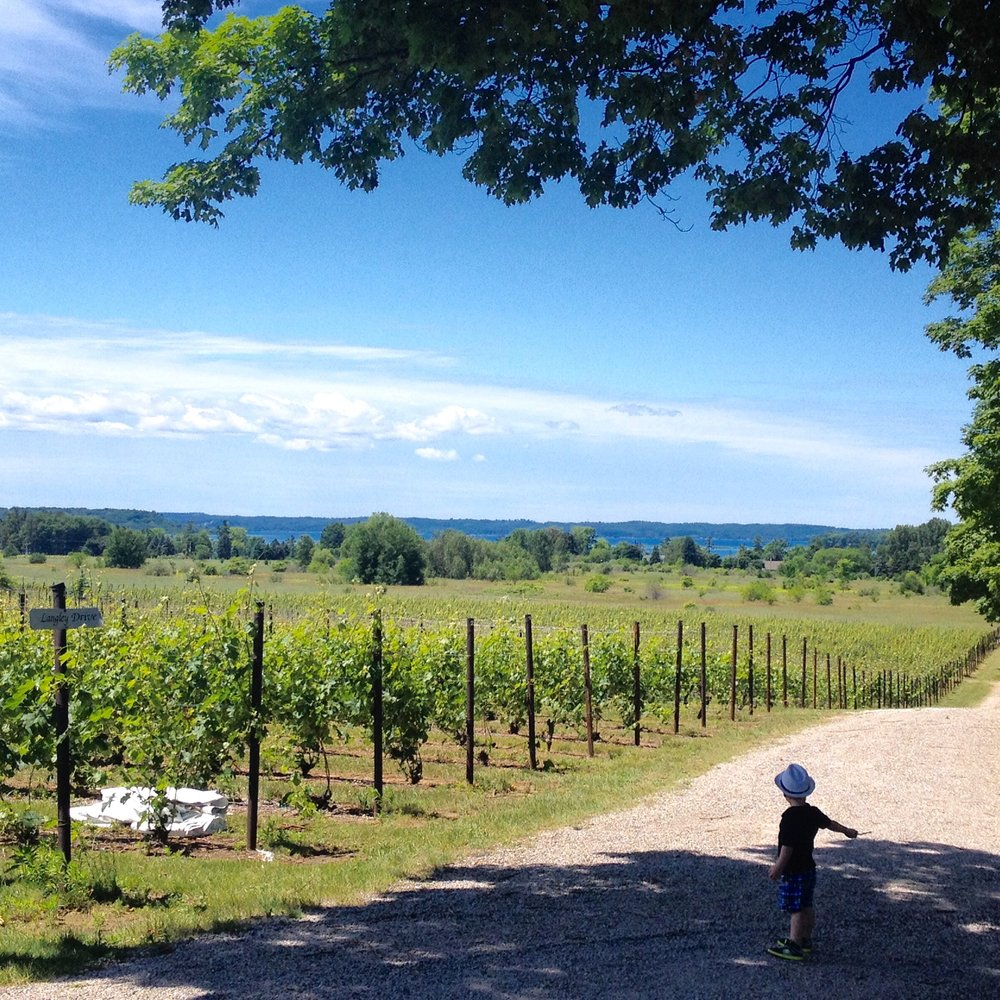 Bower's Harbor Winery view, 2016