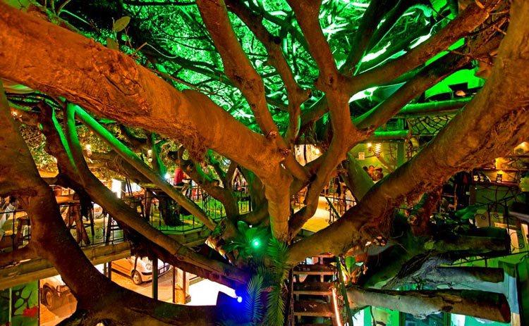 Tree house restaurant Mount Verde