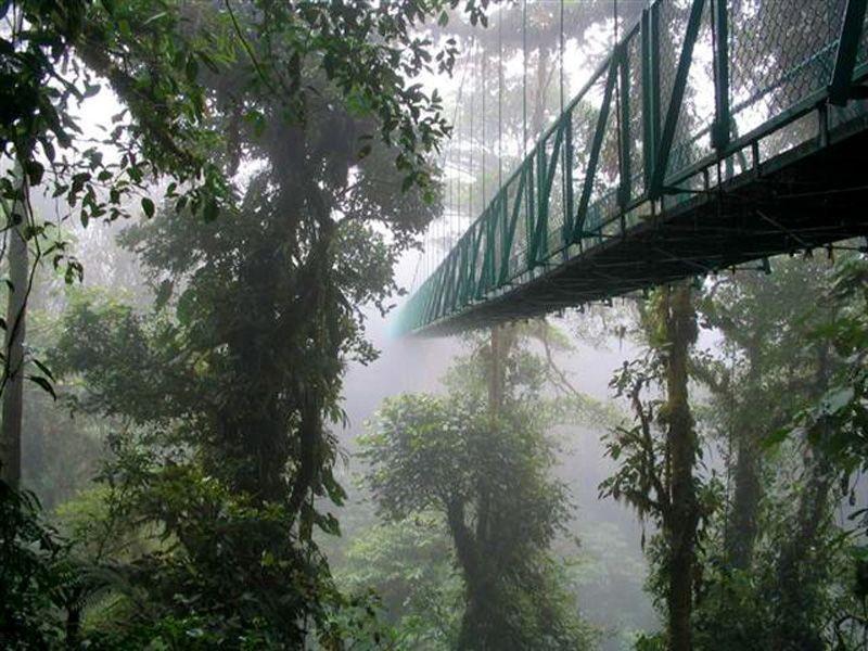 Hanging bridges mount verde