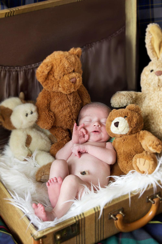 baby ok bears.jpg
